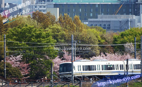 梅小路公園の桜を背景に走る電車