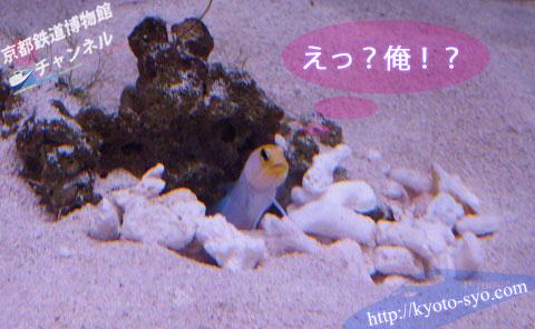 京都水族館の生きもの